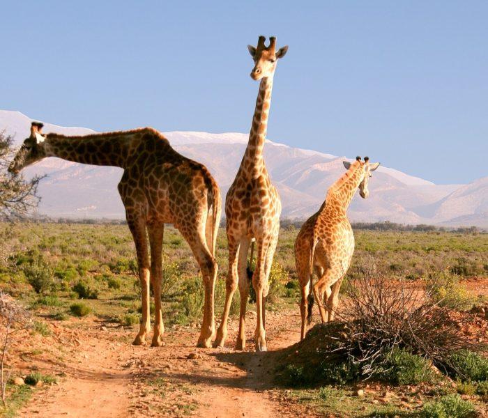 SUDAFRICA 6