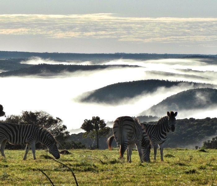 SUDAFRICA 7